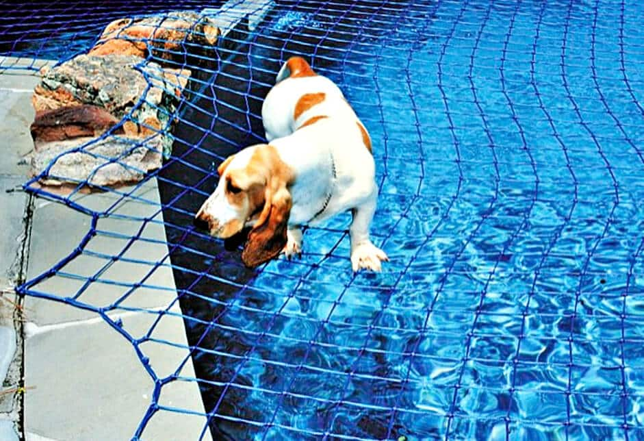 Dog Pool Safety Dogs Pool Nets Katchakid