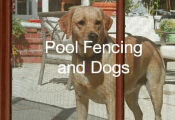5 Reasons You Should Install a Pool Fence for Dogs & Other Pets