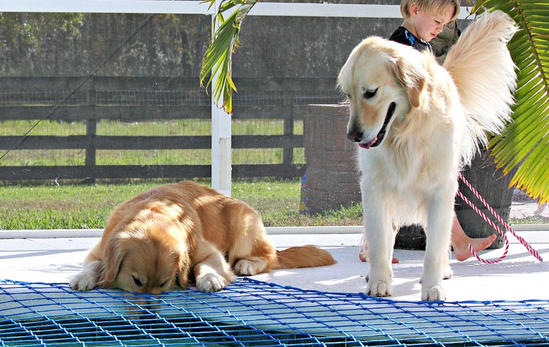 Dog Pool Safety – Pool Nets & Pets