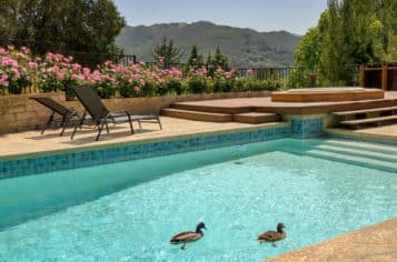 How to Keep Ducks Out of a Swimming Pool
